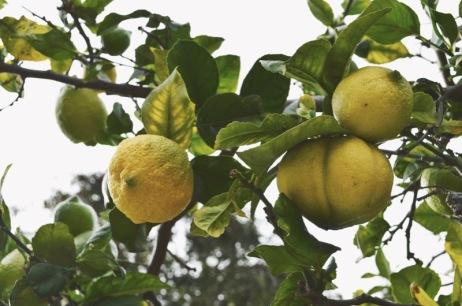 Venice Canals Lemons