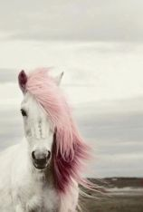 pink-haired unicorn